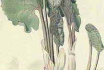 Botanical & Nature Illustrations / by Sharla Hicks