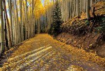 Fall / by Juli Martin