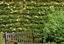 Gardening / by Lisa Motto