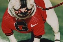 UGA / by Brandy Nida