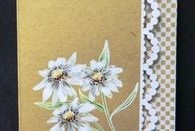 Cards - Flowers / by Elena Sordo