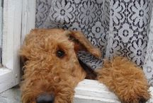 Airedales / by Sally Johnson