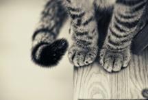CATS / by Tara Wood