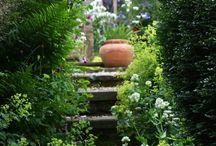 Flowers & Gardens / by diane gizzi