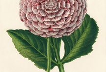 Botanical Prints  / by Deneen Azzolino