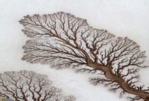 Natures architectures / by Melissa Coburn