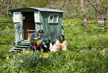 Here, Chick Chick / Chickens / by Laura Shelton