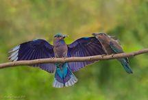 Birds / by Jan Perkins Fielding