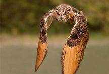 stunning wildlife photos / by Erin Horton