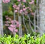 Taiwan Tea Farms / by International Tea Farms Alliance