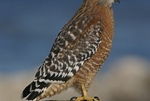 For the Birds..... / anything BIRD !!  I can't get enough of my feathered friends!  / by Kaye DeHays