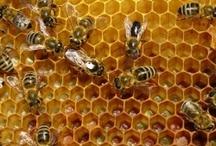 Bees / by Sue Doeden
