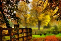 country autumn / All the reasons I love real Fall.  Want to see what Real fall is?  look here!   Reasons to Love Fall - Favorite Autumn Activies - Country Living / by Orn