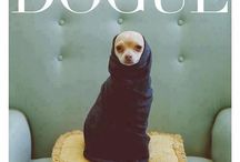 Puppy / by Olivia Murphy