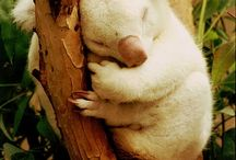 albino and melanistic animals / by Lavinia Dow
