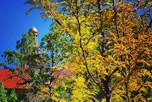 Fall / by Colorado School of Mines
