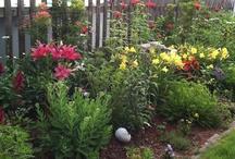 Garden / by Amber Elaine