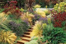 Garden / by Linda Edwards