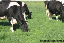 Why 100% grass fed? / A collection of stories and data as to why we have chosen to be one of the nations only 100% grass fed dairy operations. / by Cedar Summit Farm