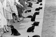 Black cat / Black cat / by Leslie Varty