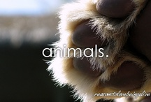 Animals / by Holly Whitlock