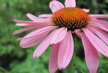 Flowers and plants / by MijnTuin • MyGarden • MonJardin • MojaZahrada.org • Meinemgarten.de