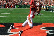 Bengals / by Shannon Combs Hanke