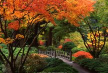 Trees Through the Seasons / Beauty in every season! / by The Davey Tree Expert Company