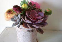 Plants, Flowers & Garden / by Sarah Neily