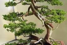 Bonsai / by Cynthia Mc Donnell