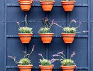Plant Whispering / by Karen Boyett