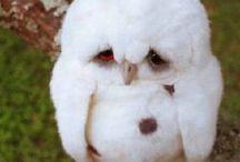 Whimsical Owls / by Linda Intelisano