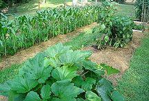 Gardening  / by Rushy Glanfield