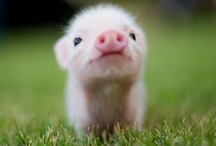 Pigs / by Jessica Buterbaugh