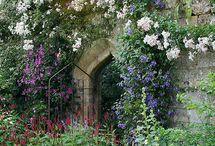 In the Garden... / by Brenda Hawkins
