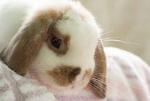 Bunnies / Cute, fluffy and adorable bunnies / by Elmira Mokri