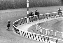 Horse Racing ♥ / by Olivia Bonsen