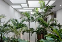 Pflanzen zu Hause, Plants at home / by ute bastian