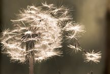 Macro & Nature Photography / by Cait'Cheetham