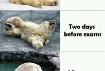Laugh often! =(D / by Haley Steverson