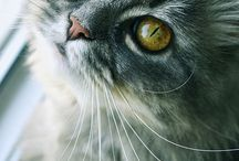 cat cat imma kitty cat / by billiejo Arnold