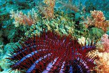 Under The Sea / by Kelley Ellison