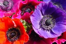 Flowers / by Filipa Pereira