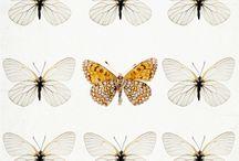 butterflies_ / by Julia
