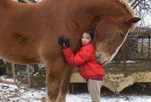 Horses / by Melinda Jackson