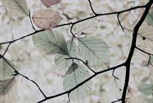 Garden / by Nandita Singh