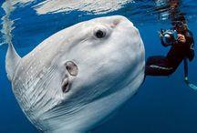 Interesting animals  / by Lisa Hube