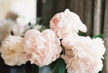 Flowers / by KS95