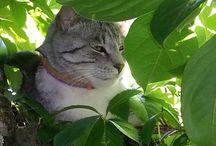 Lindos gatitos.♥♥ / by Lola Boyano Rodriguez