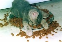 I ♥ CATS 2 / by María Inés Pinardi